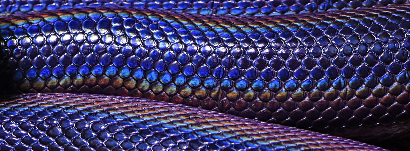 Banner of snakeskin iridescent shine