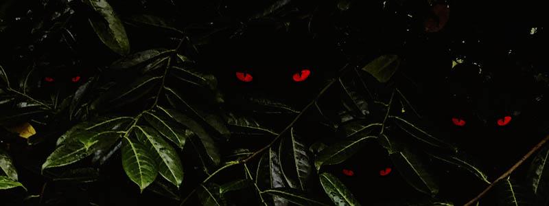 Banner for Horror Movie Plants